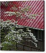 White Dogwood In The Rain Canvas Print