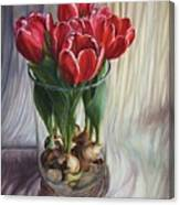 White-edged Red Tulips Canvas Print