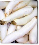 White Eggplants Canvas Print