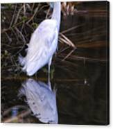 White Egret And Reflection Canvas Print