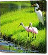 White Egret And Roseate Spoonbills Canvas Print
