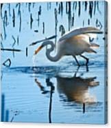 White Egret At Horicon Marsh Wisconsin Canvas Print