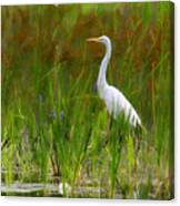 White Egret In Waiting Canvas Print