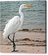 White Egret On Beach Canvas Print