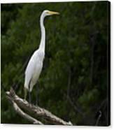 White Egret-signed-#0493 Canvas Print