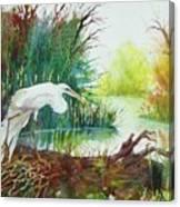 White Egret Swamp Canvas Print