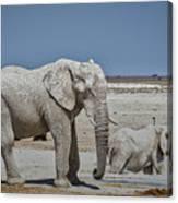 White Elephants Canvas Print
