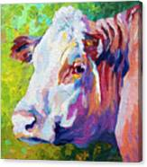 White Face Cow Canvas Print