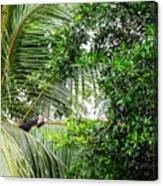 White Faced Capuchin Monkey Costa Rica Canvas Print