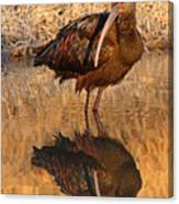 White-faced Ibis Reflecting On Late Spring Morning Canvas Print