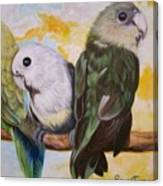 Chloe The    Flying Lamb Productions           White Faced Lovebirds Canvas Print