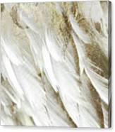 White Feathers With Gold Canvas Print