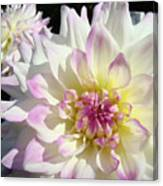 White Floral Art Bright Dahlia Flowers Baslee Troutman Canvas Print