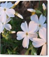 White Floral Lights Canvas Print