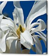 White Flower Blue Skies Canvas Print