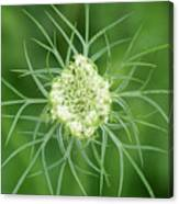 White Flower Spidery Leaves Canvas Print