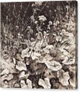 White Flowers 1877 12 3h9 Ivan Ivanovich Shishkin Canvas Print
