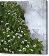 White Flowers And Water Canvas Print