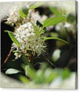White Flowers On Canvas Canvas Print