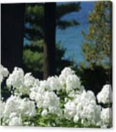 White Flowers W16 Canvas Print