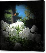 White Flowers With Monarch Butterfly Canvas Print