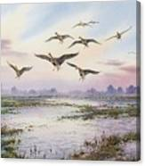 White-fronted Geese Alighting Canvas Print