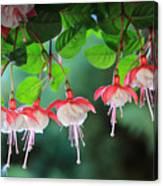 White Fuchsia Canvas Print