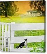 White Gate Cat Canvas Print