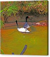 White, Geese, On, Pond Canvas Print