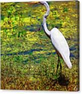 White Heron 1 Canvas Print