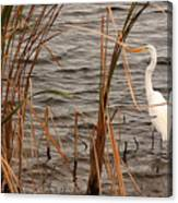 White Heron Canvas Print