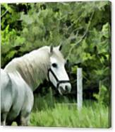 White Horse In A Green Pasture Canvas Print