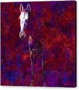 White Horse White Horse  Canvas Print