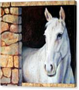 White Horse1 Canvas Print
