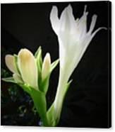 White Hostas Blooming 7 Canvas Print