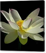 White Hot And Graceful Canvas Print