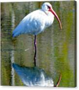 White Ibis And Reflection Canvas Print