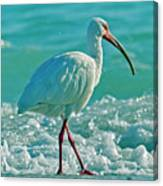 White Ibis Paradise Canvas Print