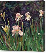 White Irises Canvas Print