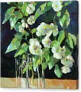 White Jasmine In A Ikea Bowl Canvas Print
