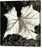 White Leaf On The Ground Canvas Print