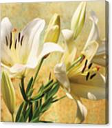 White Lilies On Amber Canvas Print