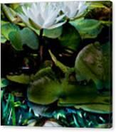 White Lilies, White Reflection Canvas Print