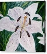 White Lillies Canvas Print