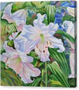 White Lily. 2007 Canvas Print