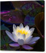 White Lily Rising Canvas Print
