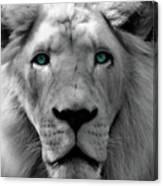 White Lion Hue Canvas Print