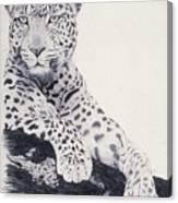 White Loepard Canvas Print
