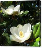 White Magnolia Flowers 01 Canvas Print
