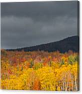 White Mountain Hillside Canvas Print